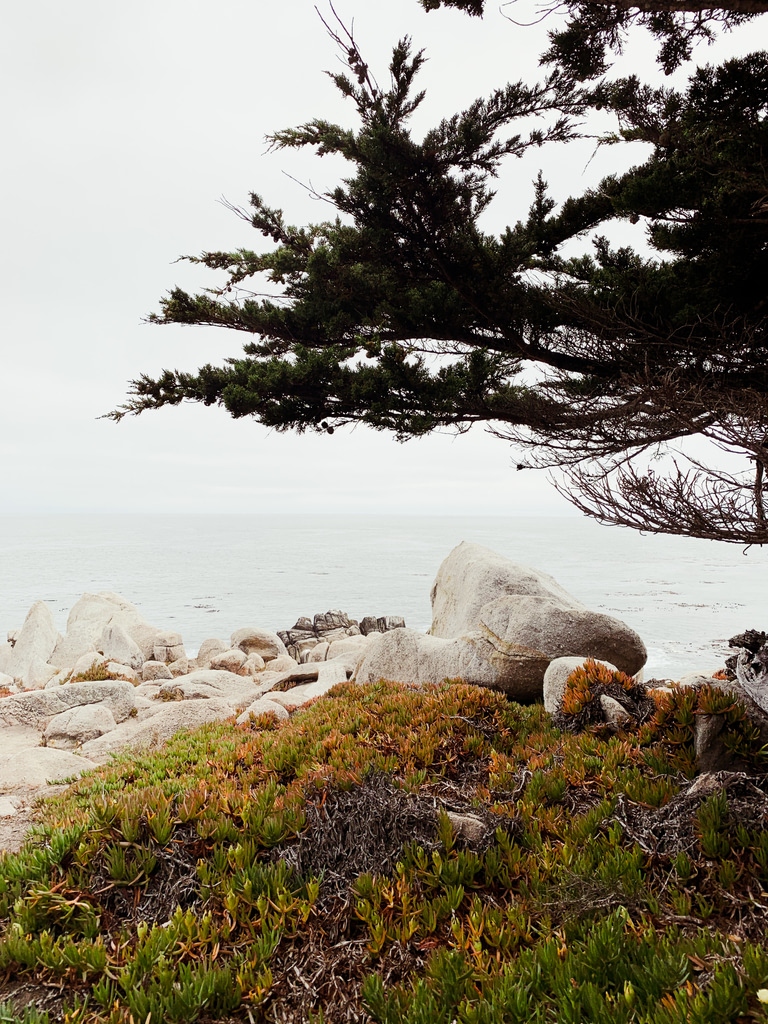 Cypress Point Look Out Monterey 17 Mile Drive